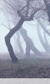 Fog wallpaper for HUAWEI Ascend Y300