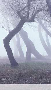 Fog wallpaper for Motorola ELECTRIFY 2