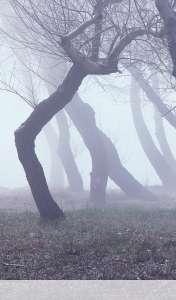 Fog wallpaper for Maxwest TAB 7160DC