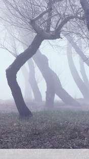 Fog wallpaper for Sony XPERIA VL
