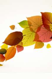Colour leaves wallpaper for Vodafone Smart Mini