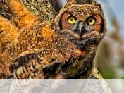 Baby owl wallpaper for Fly FlyLife Connect 7.85 3G Slim