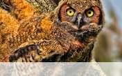 Baby owl wallpaper for Lenovo Miix 2