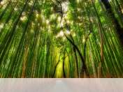 Bamboo forest wallpaper for Fly FlyLife Connect 7.85 3G Slim
