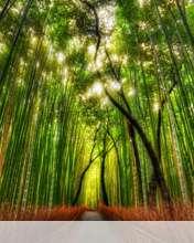 Bamboo forest wallpaper for Videocon V1414