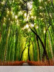 Bamboo forest wallpaper for Micromax X276