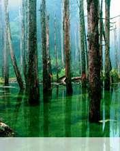 Flooded forest wallpaper for Videocon V1414