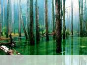 Flooded forest wallpaper for Apple iPad 4 CDMA