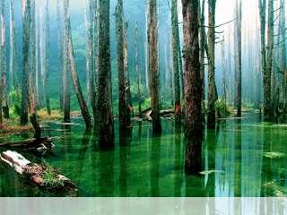 Flooded forest mobile wallpaper for