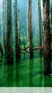 Flooded forest wallpaper for Goophone X1