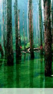 Flooded forest wallpaper for Motorola ELECTRIFY 2