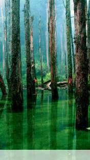 Flooded forest wallpaper for HUAWEI Glory 4