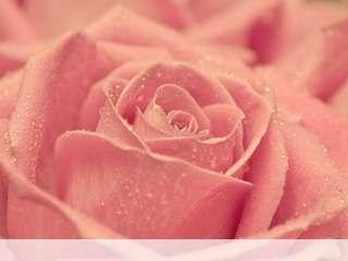 Rose heart mobile wallpaper for