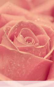 Rose heart wallpaper for HP Slate 7 Extreme