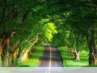 Summer road mobile wallpaper for