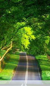 Summer road wallpaper for Samsung Galaxy Tab 3 Kids