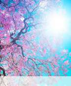Spring%20sunshine wallpaper for