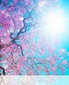 Spring%20sunshine wallpaper for