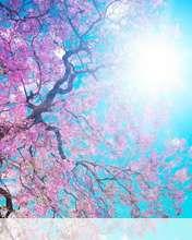 Spring sunshine wallpaper for Videocon V1414