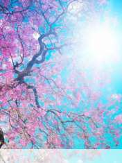 Spring sunshine wallpaper for Samsung Galaxy Chat
