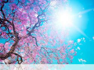 Spring sunshine mobile wallpaper for