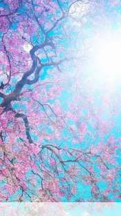 Spring sunshine wallpaper for NEC MEDIAS W N05E