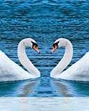 Swans form heart wallpaper for Videocon V1415