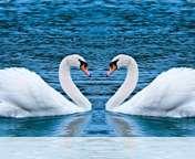 Swans form heart wallpaper for Icemobile Submarine