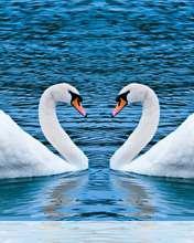 Swans form heart wallpaper for Videocon V1414