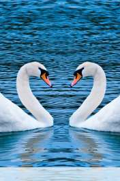 Swans form heart wallpaper for Vodafone Smart Mini