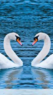 Swans form heart wallpaper for HUAWEI Glory 4