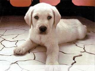 Dog on the floor mobile wallpaper for