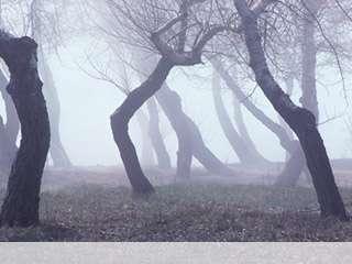 Fog mobile wallpaper for