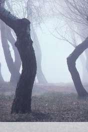Fog wallpaper for HUAWEI Ascend Y