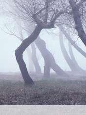 Fog wallpaper for LG Vu 3