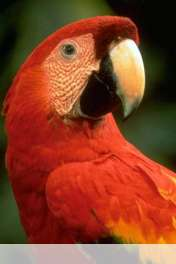 Parrot wallpaper for HUAWEI Ascend Y