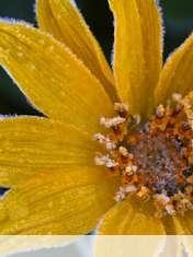 Flower wallpaper for Icemobile Sol II