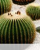 Cactus mobile wallpaper Select your device to download!
