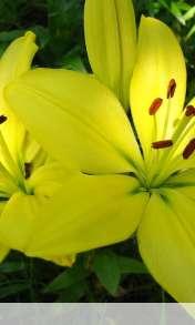 Flower wallpaper for Alcatel OT 997