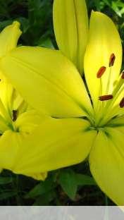 Flower wallpaper for Apple iPhone 5C