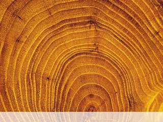Wood mobile wallpaper for
