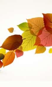 Colour leaves wallpaper for Videocon V1580