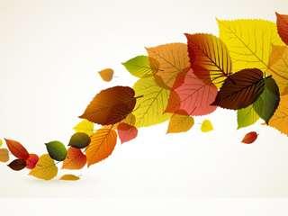 Colour leaves mobile wallpaper for
