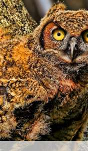 Baby owl wallpaper for Acer ICONIA TAB A110