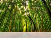 Bamboo forest wallpaper for Insignia Flash