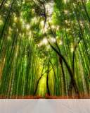 Bamboo forest mobile wallpaper Select your device to download!