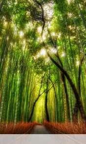 Bamboo forest wallpaper for Videocon V1580