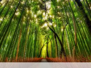 Bamboo forest mobile wallpaper for