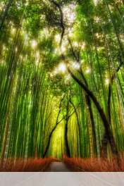 Bamboo forest wallpaper for HUAWEI Ascend Y