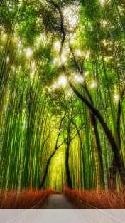 Bamboo forest wallpaper for Celkon A125